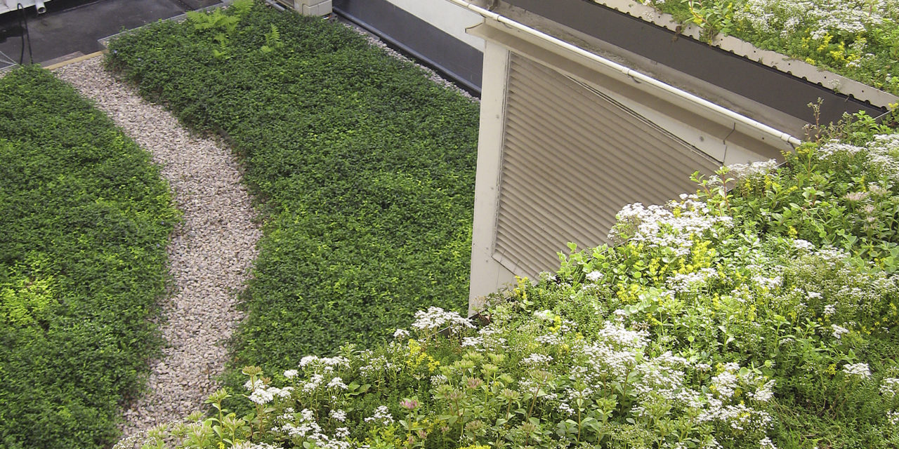 Grå och steril innergård blir grön och levande!