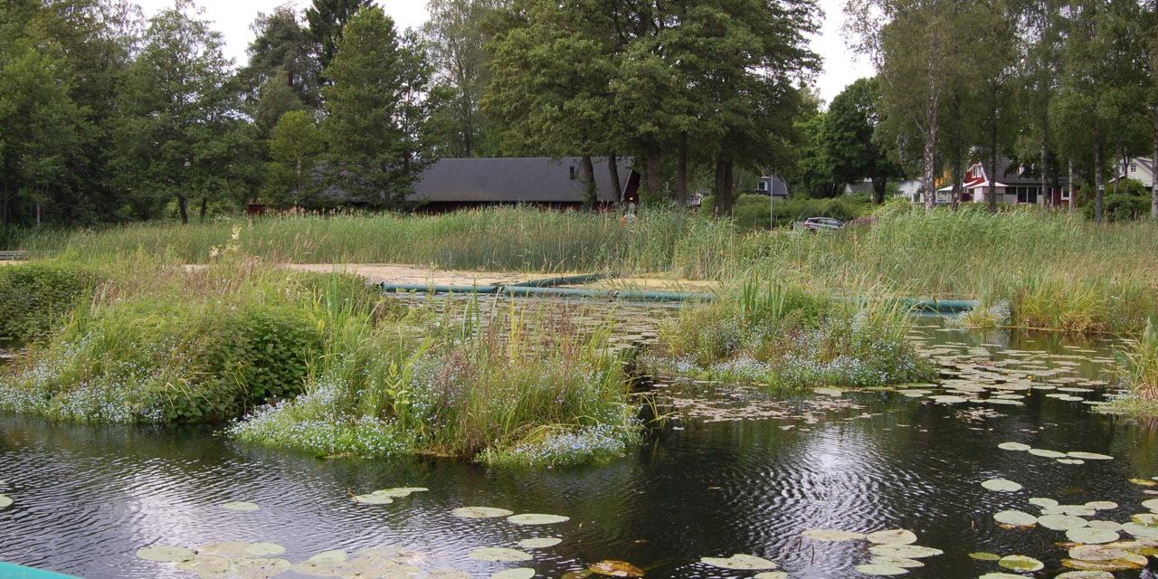 Naturlig rening – bland flytande öar i Rönningesjön, Täby kommun