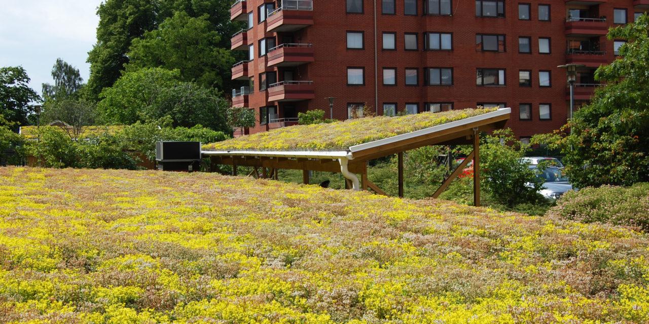Modellering av gröna tak – avrinningskoefficienter