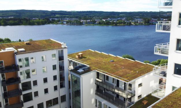 SMHI skriver om gröna tak