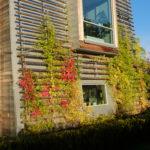 Gröna fasader i Uppsala