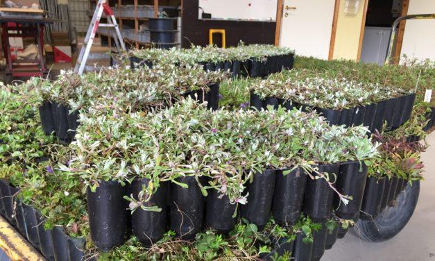 Veg Tech 7500 örtpluggplantor till Campus Ultuna