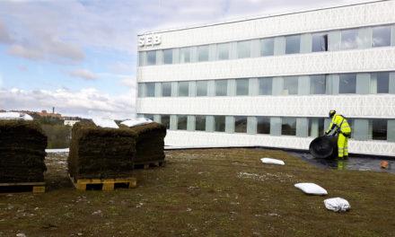 Sedumtak på Arenastaden i Solna