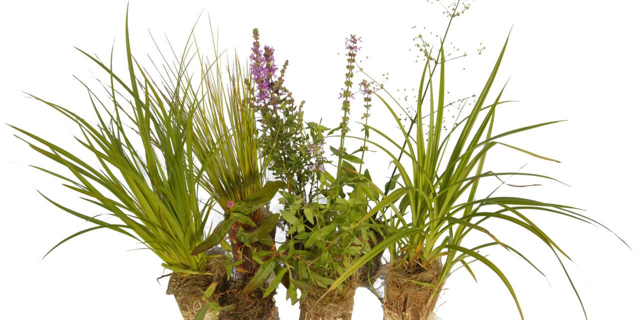 Växter planterade i bioreningsverk!