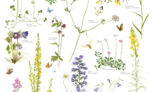 Ängar gynnar pollinering