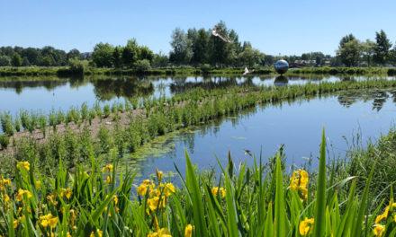 Översilningsvallar i Växjösjön förbättrar vatten