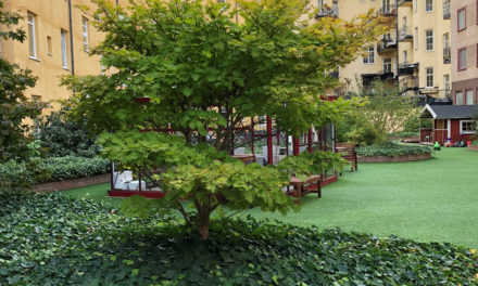 Grön innergård efter 10 år