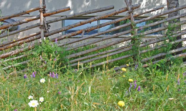 Stadsängar stödjer biologisk mångfald
