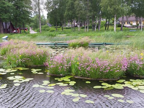 Täby kommun, rening av Rönningesjön