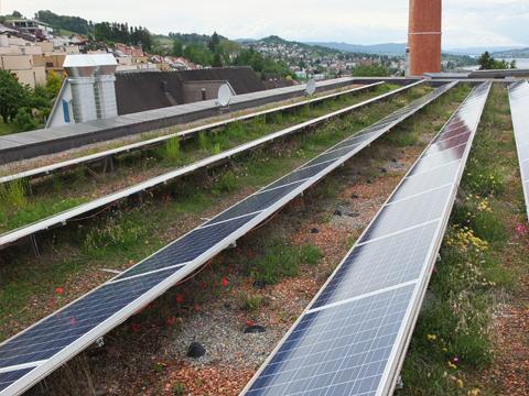 Sedum och solceller
