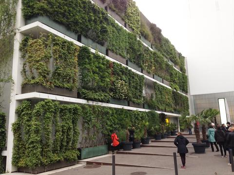 Växter på fasaden