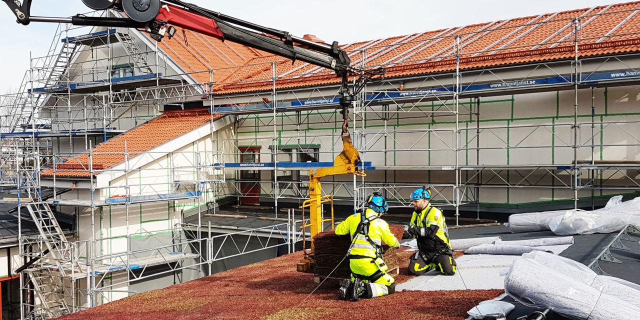 Veg Tech monterar stora ytor sedumtak i Lysekil