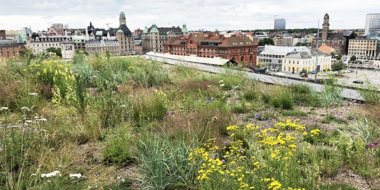 Takträdgård där grönskan får en plats