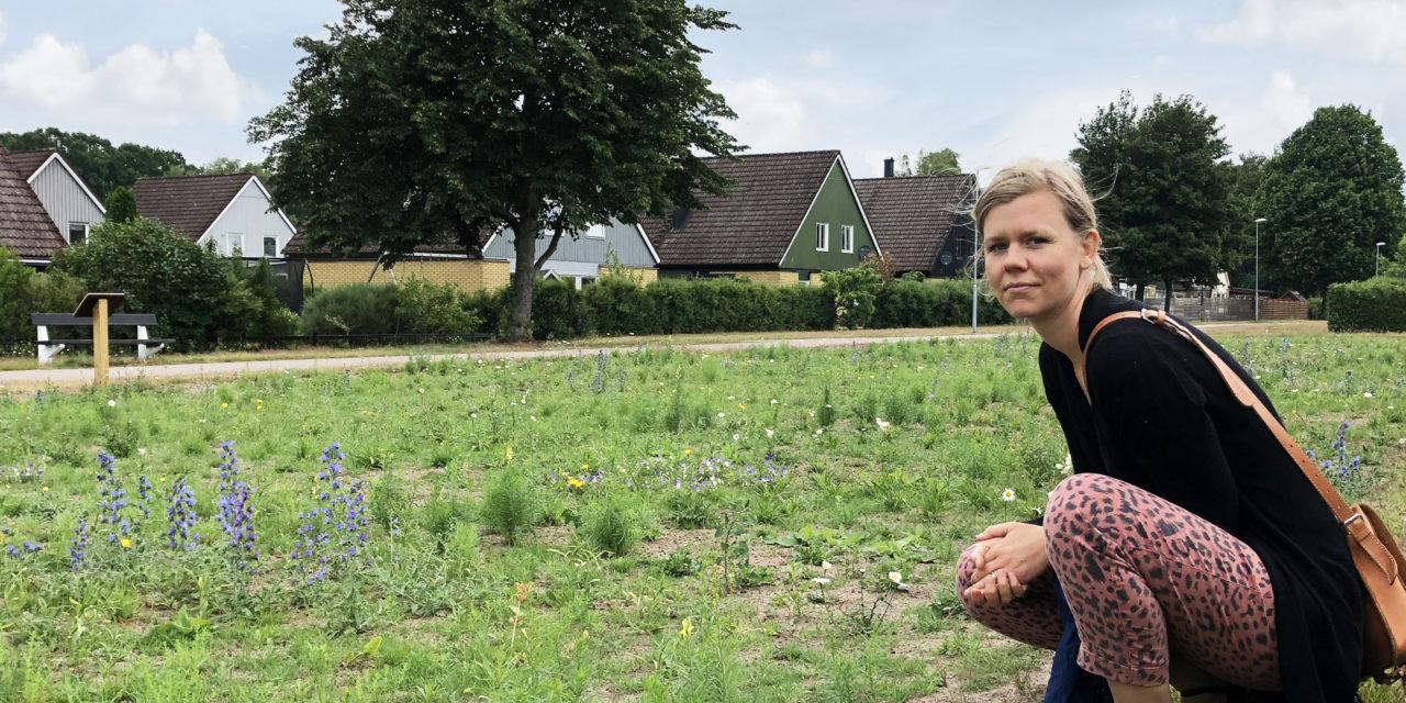 Ängelholm satsar på att omvandla gräsytor till blomstrande ängar