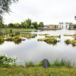Dagvattenrening med flytande våtmark