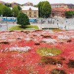 I den moderna stadsbilden involveras gröna tak och biologisk mångfald!