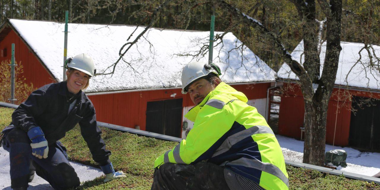 Följ Erika Åbergs sedumtak med biokol under ett år